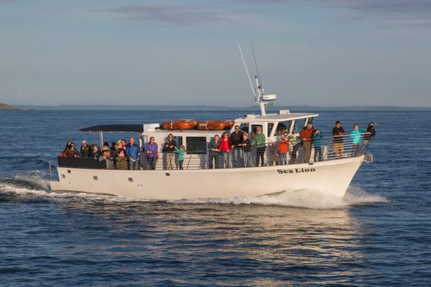 Seattle Whale Watching Tours.