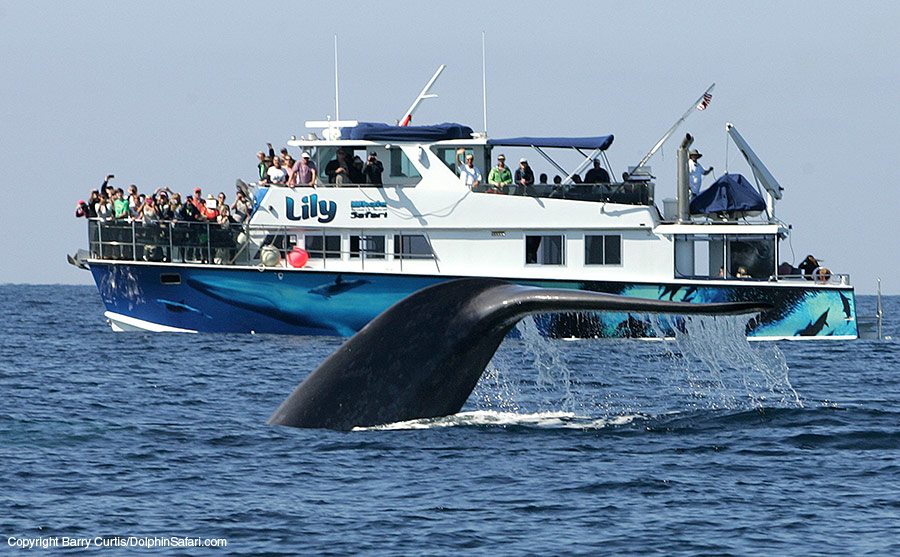 Private Charters : Capt. Dave's Whale Watching Safari With.