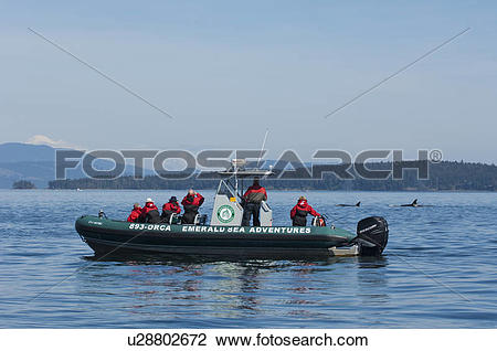 Stock Photo of Whale watching boat, Emerald sea adventures, Gulf.