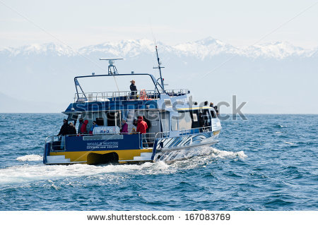 Whale Watch Stock Photos, Royalty.