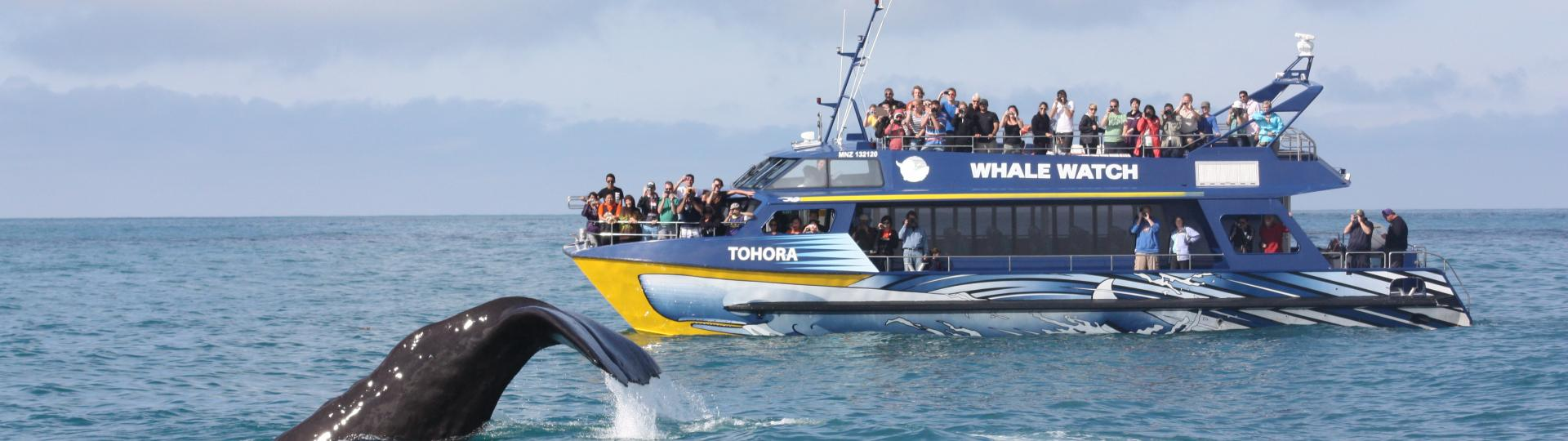 Whale Watch Tours & Kaikōura Day Tours.