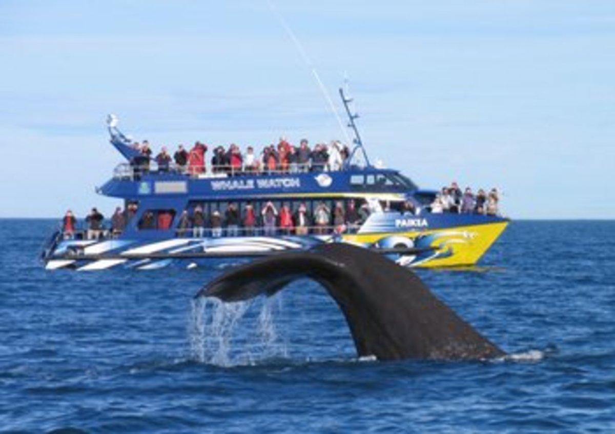 Canterbury Kaikoura Water Whale Watch Kaikoura.