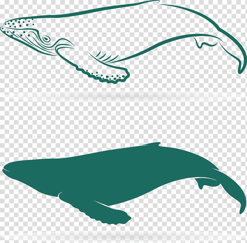 Dolphin Sperm whale Baleen whale, Lovely big whale.