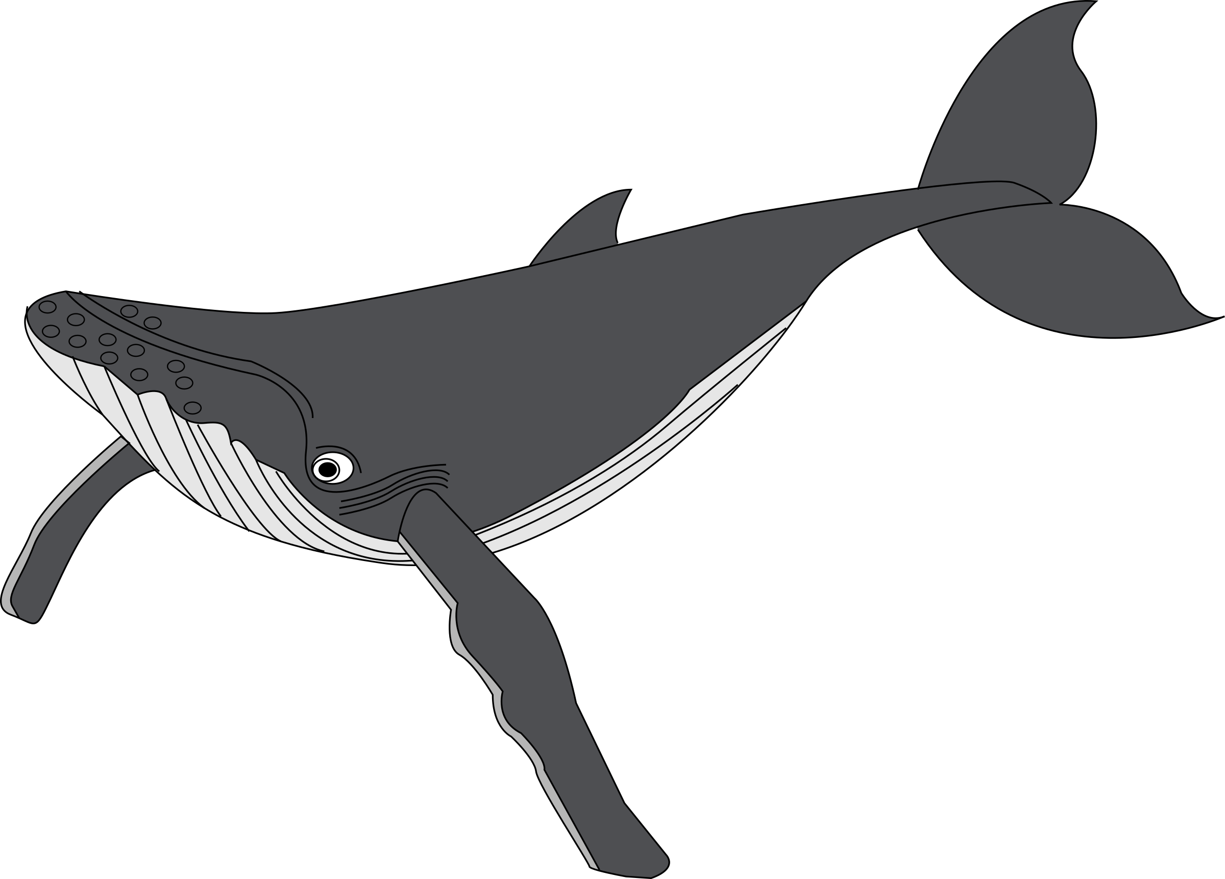 Clipart whale baleine, Clipart whale baleine Transparent.