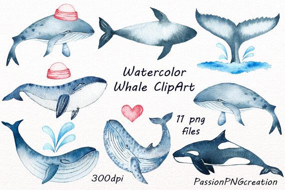 Watercolor Whale Clipart, Whale clip art, digital watercolor.