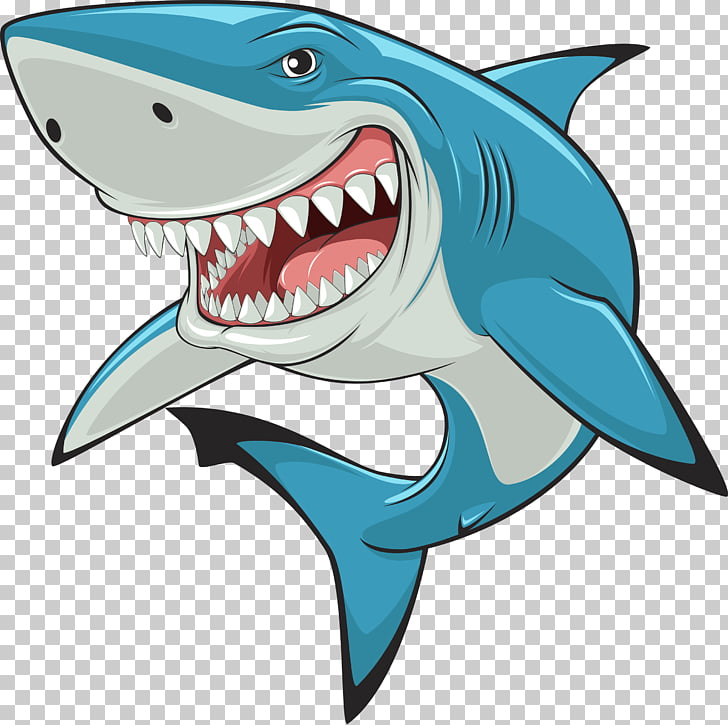 Shark , whale PNG clipart.
