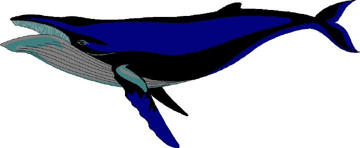Free whale clipart 2.