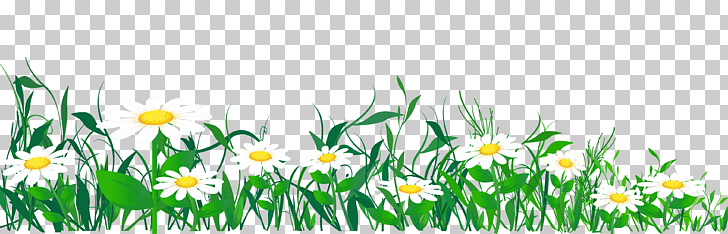 Common daisy , Daisies and Grass , white daisies template.