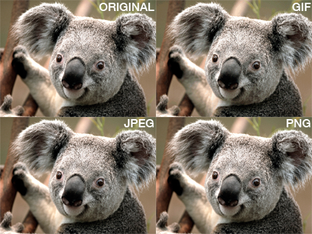 Difference Between Jpeg And Png (107+ images in Collection) Page 2.