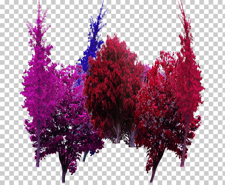 Tree Garden Computer file, Color garden trees in kind PNG.