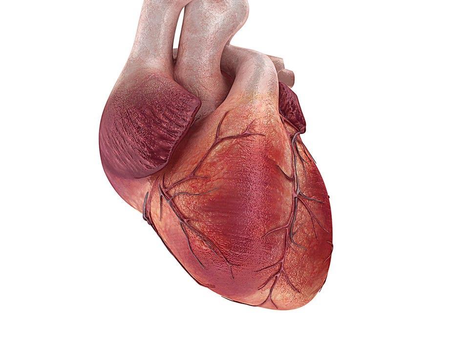 Inside Your Heart!.