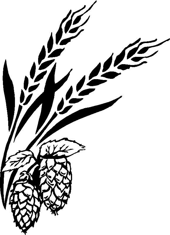 Pics For > Beer Barley Drawing.