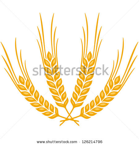 Wheat beer vector free vector download (749 Free vector) for.