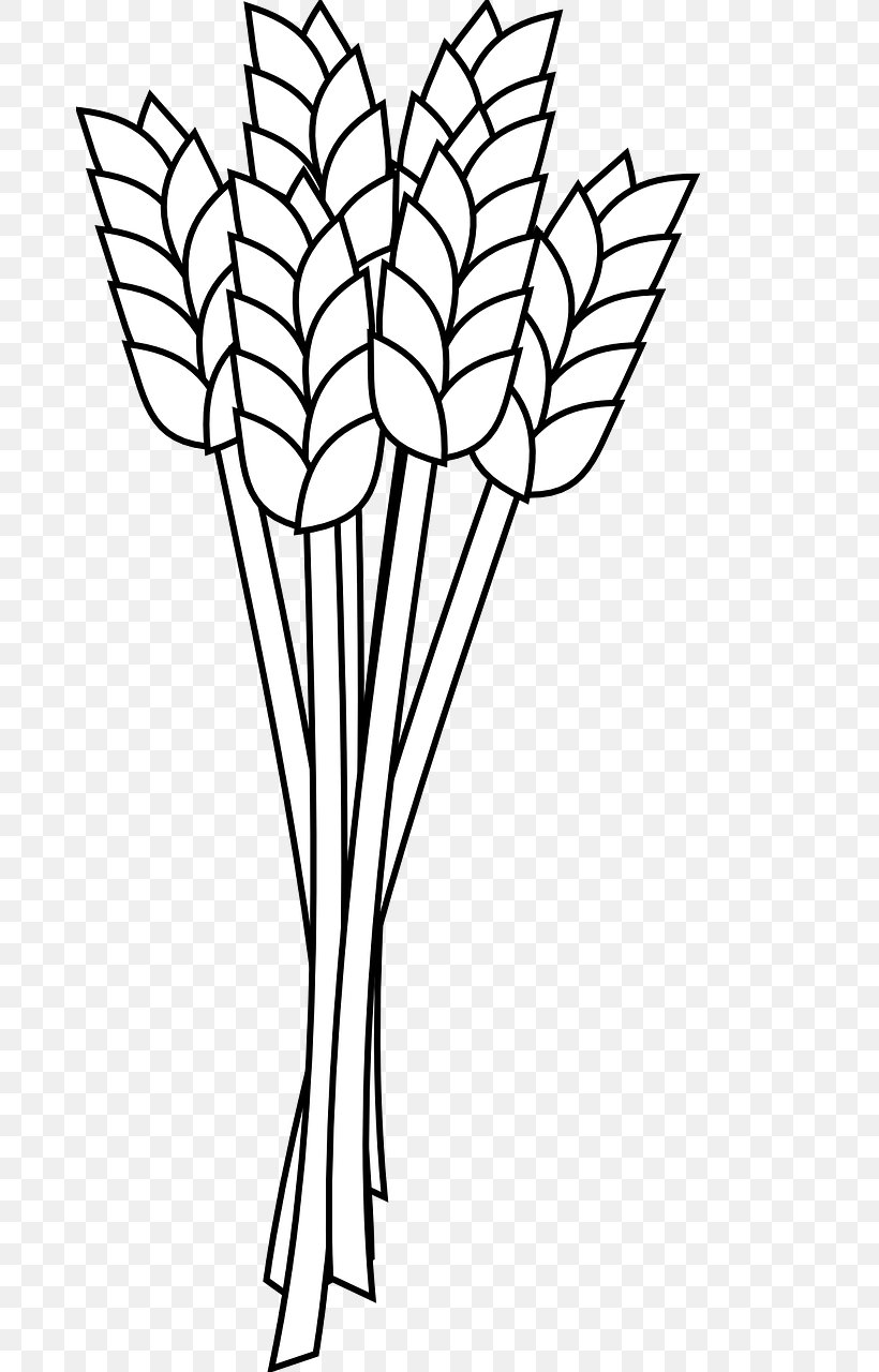 Wheat Flour Coloring Book Whole Grain Clip Art, PNG.