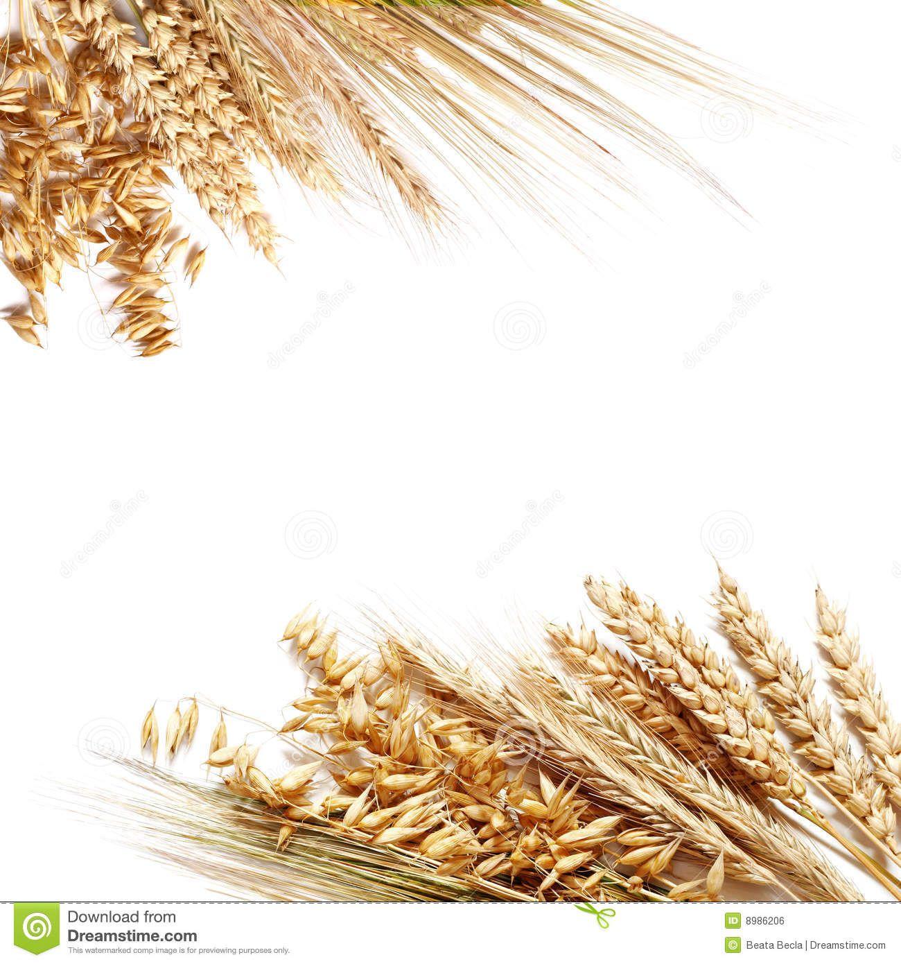 Wheat Border Clip Art Wheat border clipart wheat.