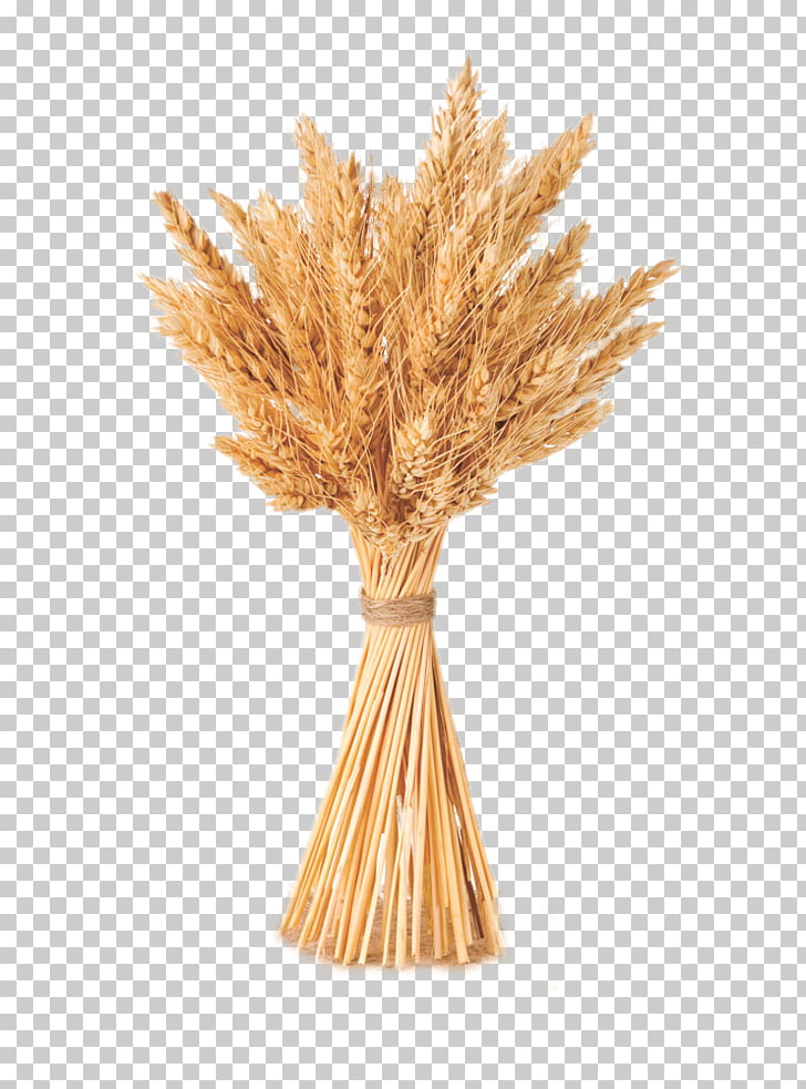 Wheat Cereal Barley, Same bundle of wheat, wheat bundle PNG.