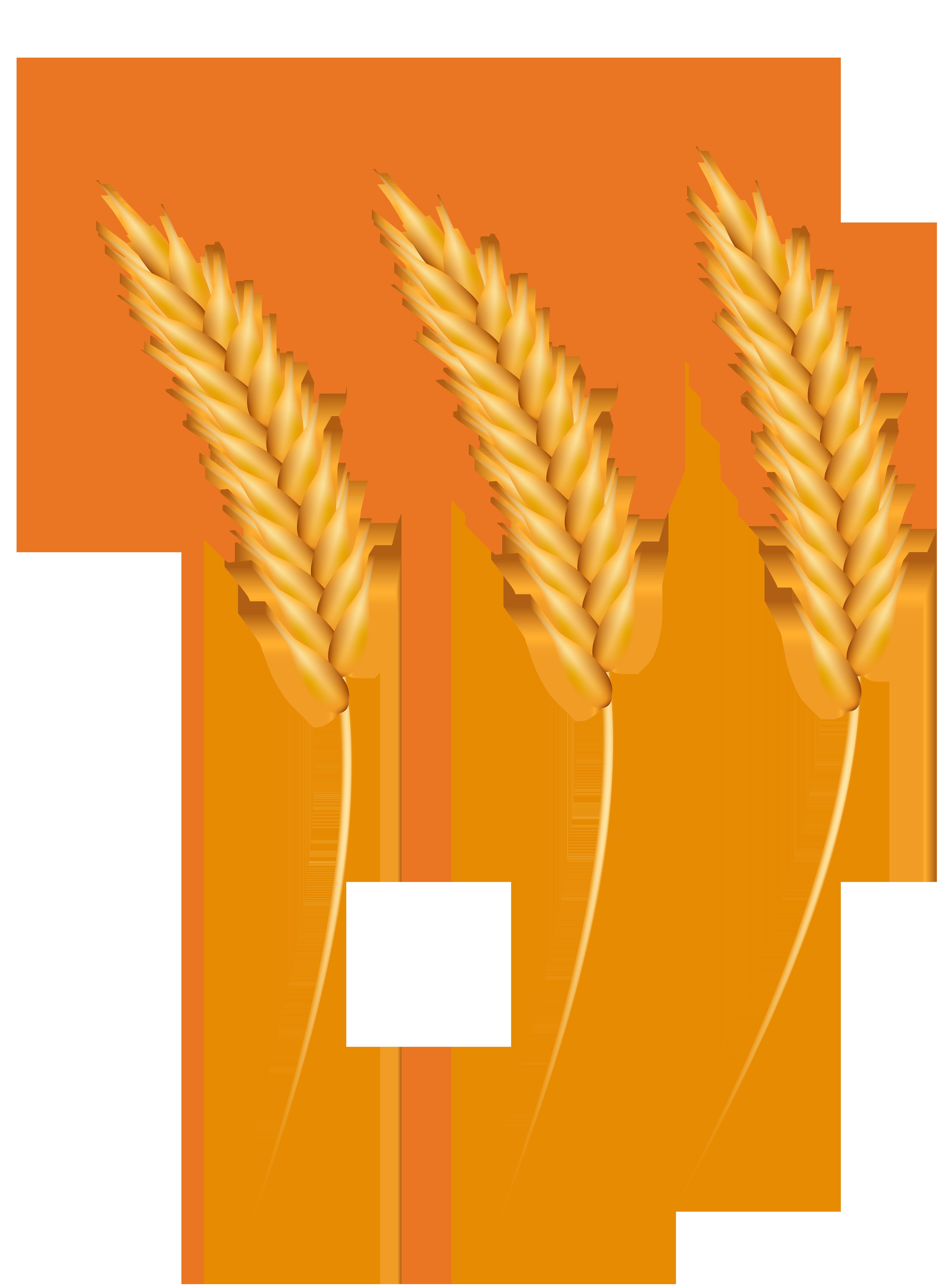 Wheat Grains PNG Clip Art Image.