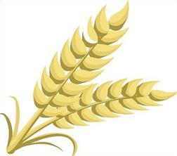 wheat stalk clipart