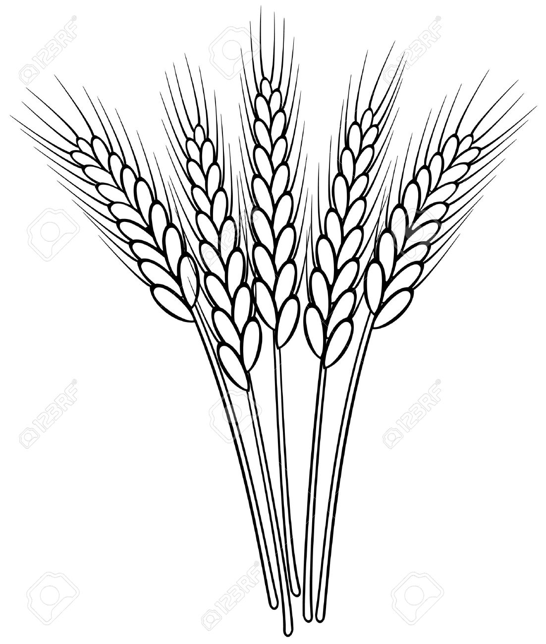 bunch of vector black and white wheat ears.