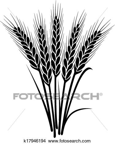 Vector black and white bunch of wheat ears Clipart.
