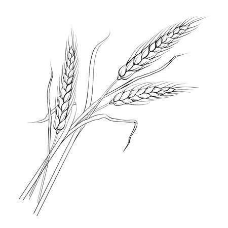 Wheat clipart black and white » Clipart Portal.