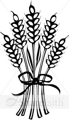 Wheat Tied with Ribbon.