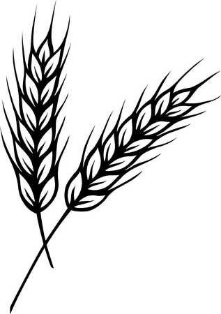 31 best images about Wheat on Pinterest.