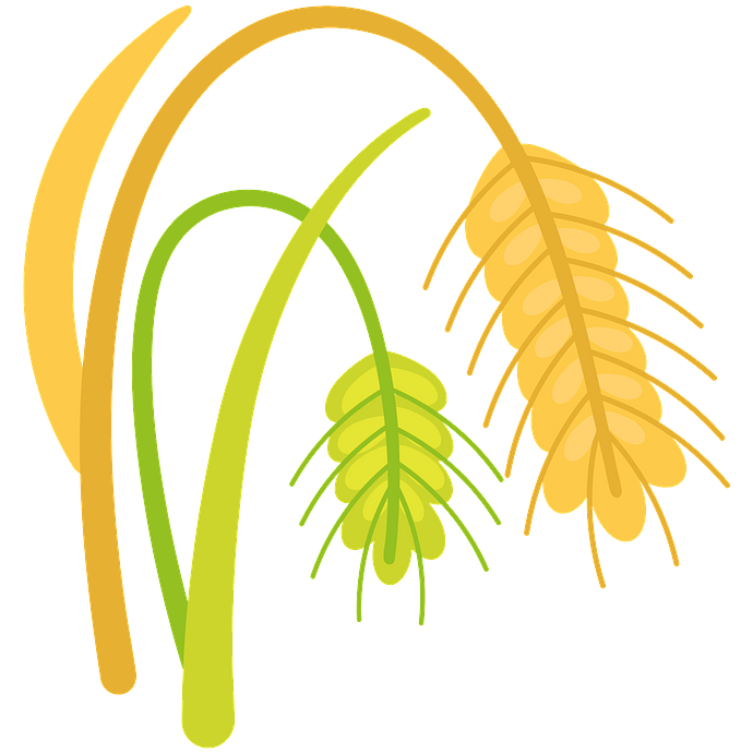 Wheat clipart. Free download..