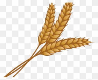 Free PNG Wheat Clipart Clip Art Download.