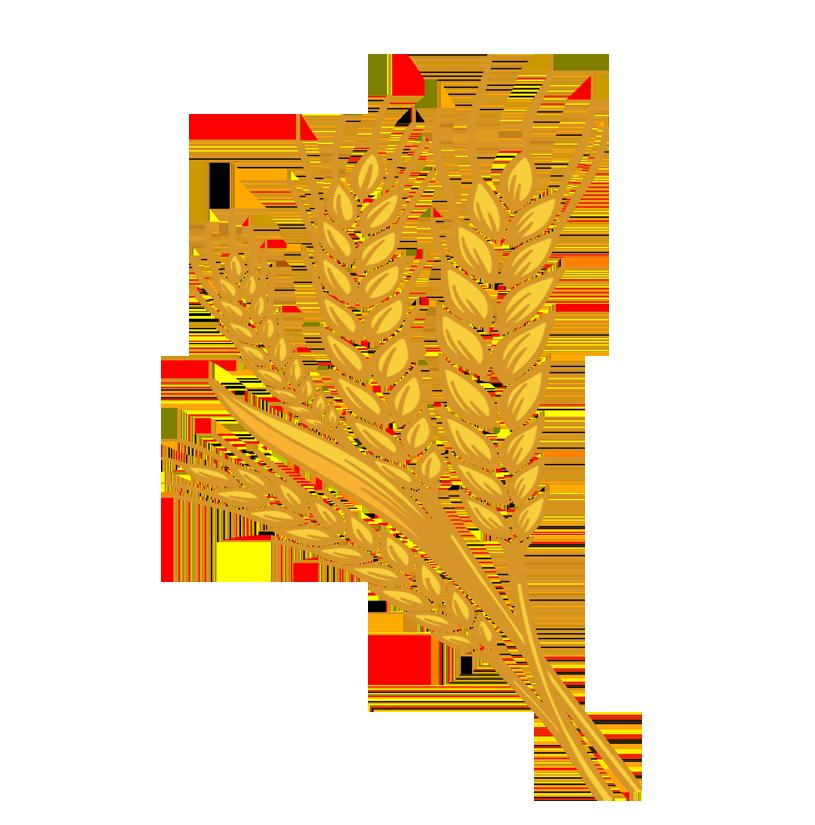 Wheat clipart wheat stock, Wheat wheat stock Transparent.