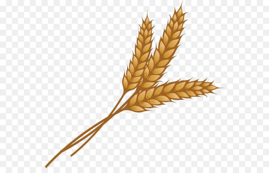 Wheat vector transparent cartoon png files, Free CLip Art.