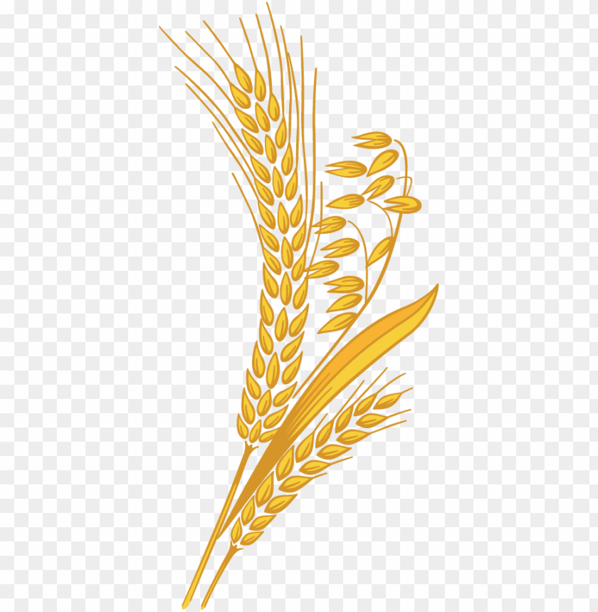 wheat grain png clipart transparent library.