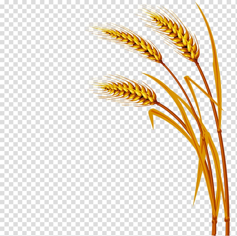 Wheat , Wheat transparent background PNG clipart.
