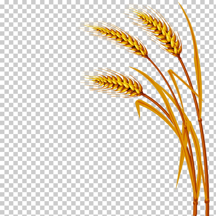 Wheat , Wheat PNG clipart.
