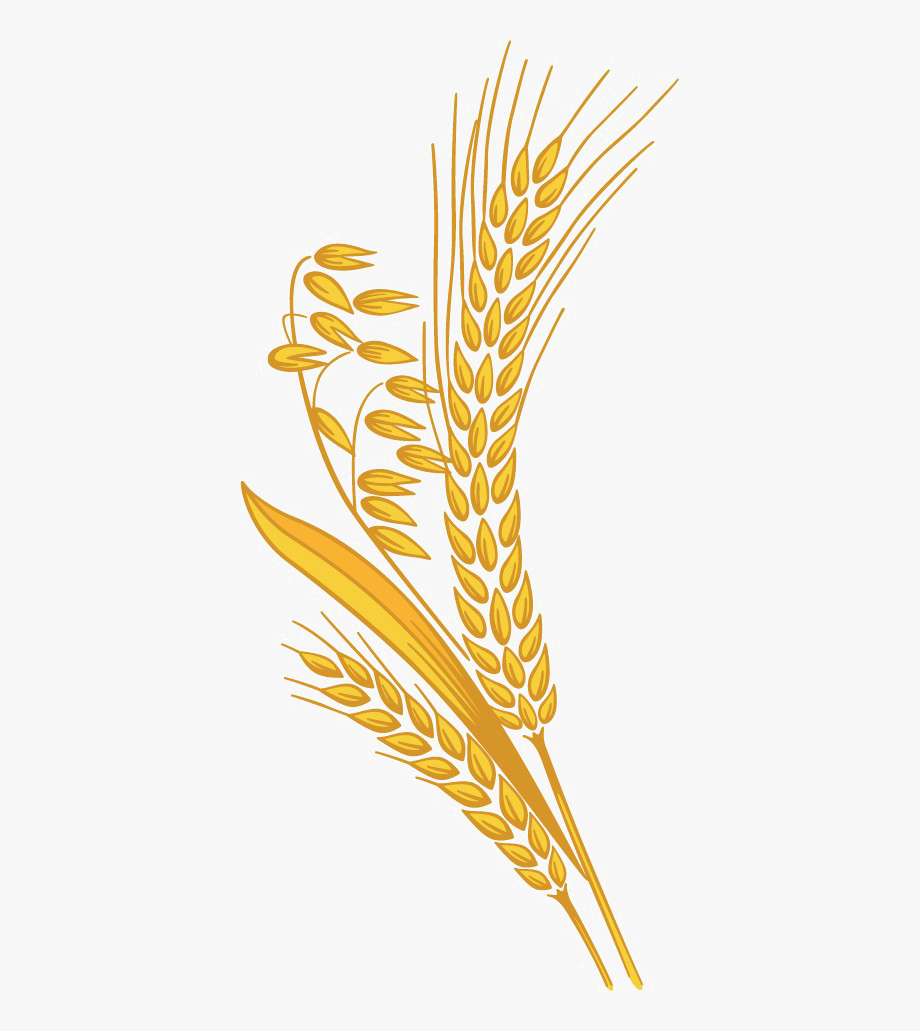 Transparent Background Wheat Clipart , Transparent Cartoon.