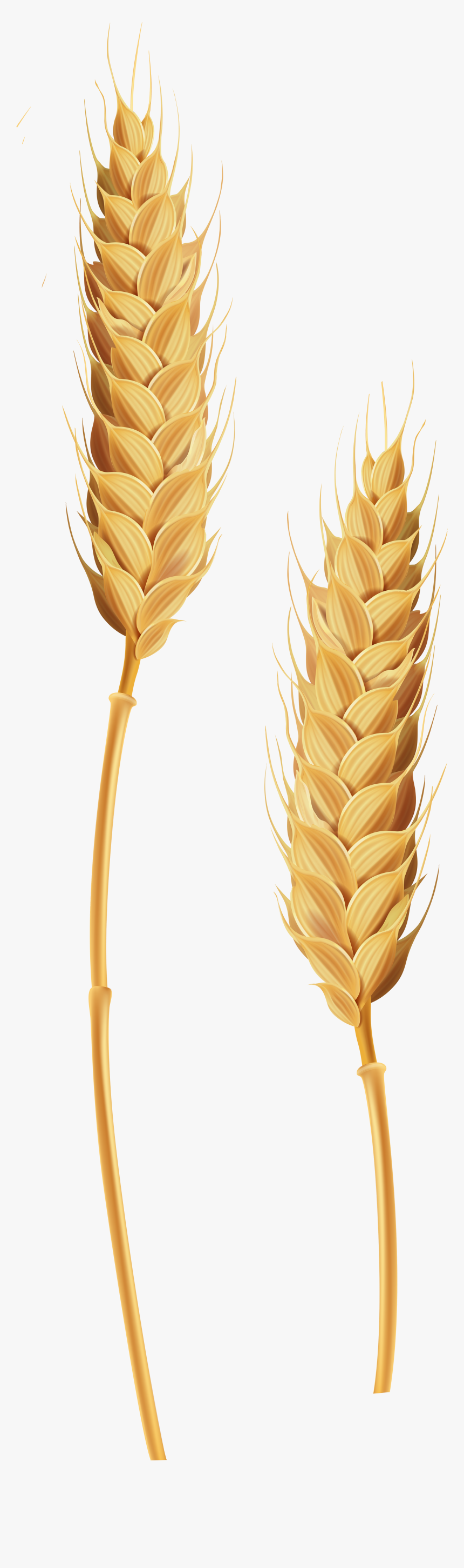 Wheat Clipart Transparent Background.