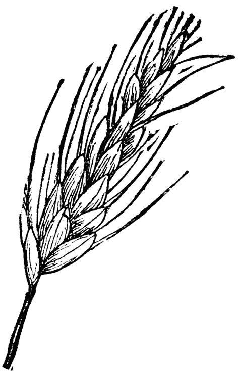 Image result for black and white wheat bundle clipart.