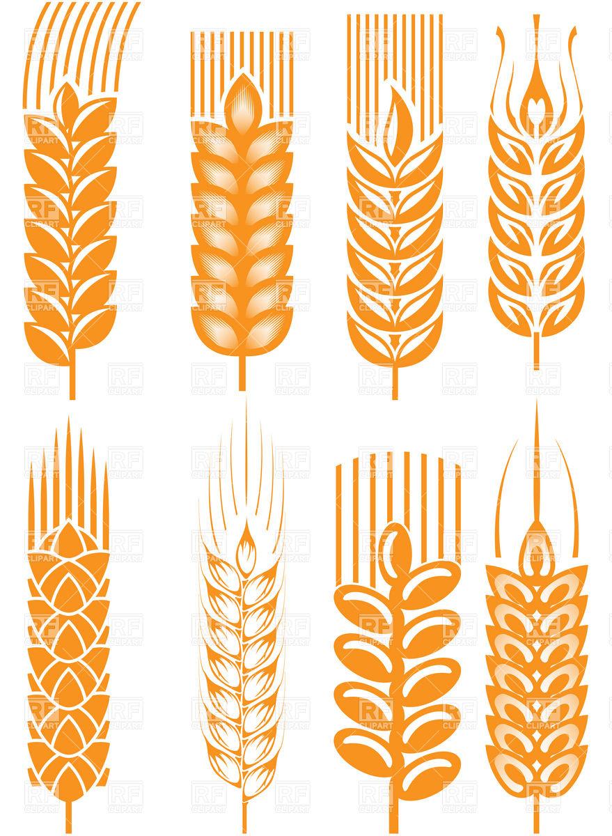 Wheat Clipart.