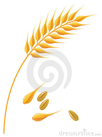 Clipart wheat ears.