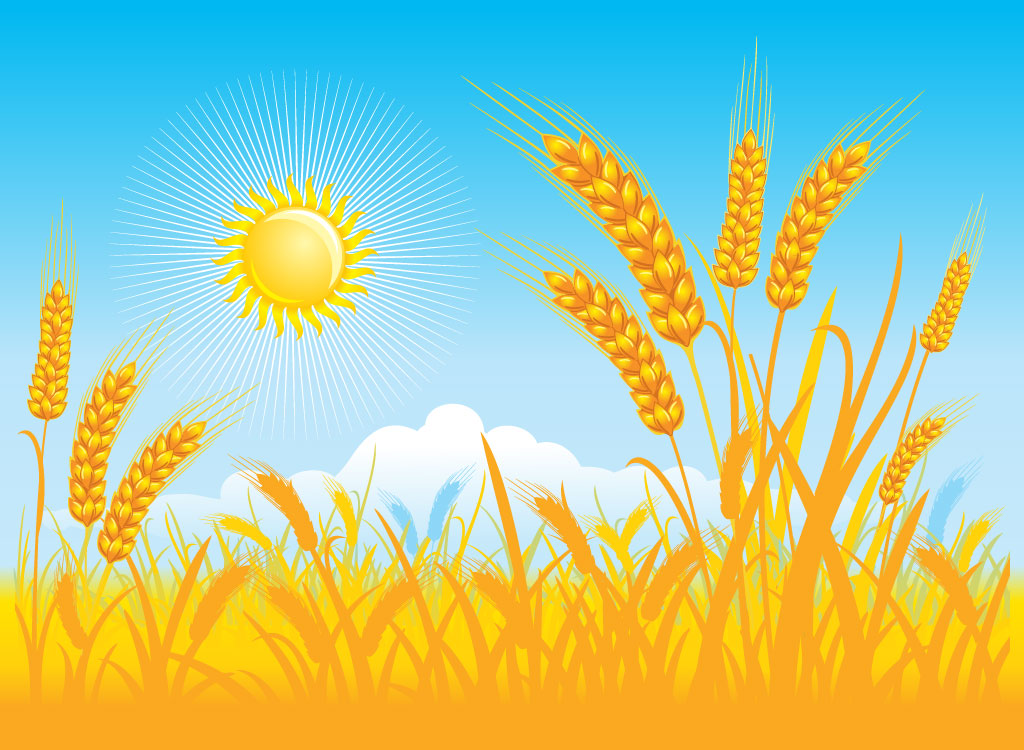 Wheat field clipart 4 » Clipart Station.