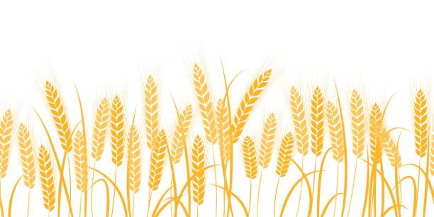 Best Wheat Illustrations, Royalty.