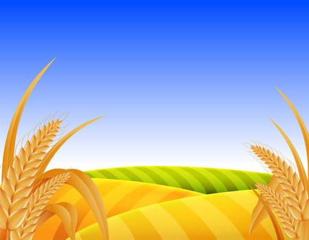 805 Wheat Field Sunset Stock Vector Illustration And Royalty Free.