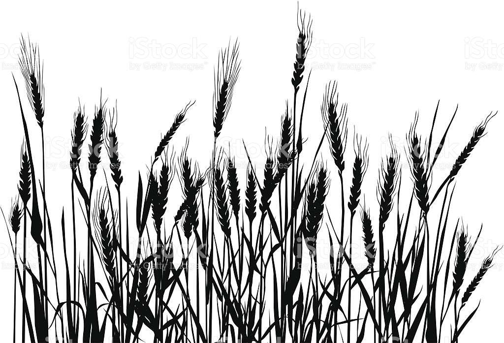 Wheat Field Clipart Black And White.