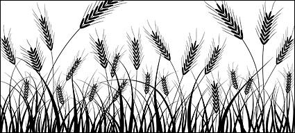 Wheat silhouettes vector material.