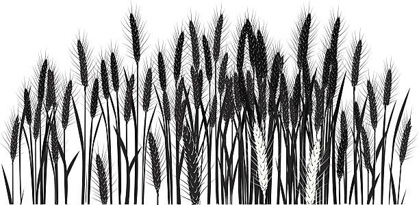 Wheat Field Clipart.