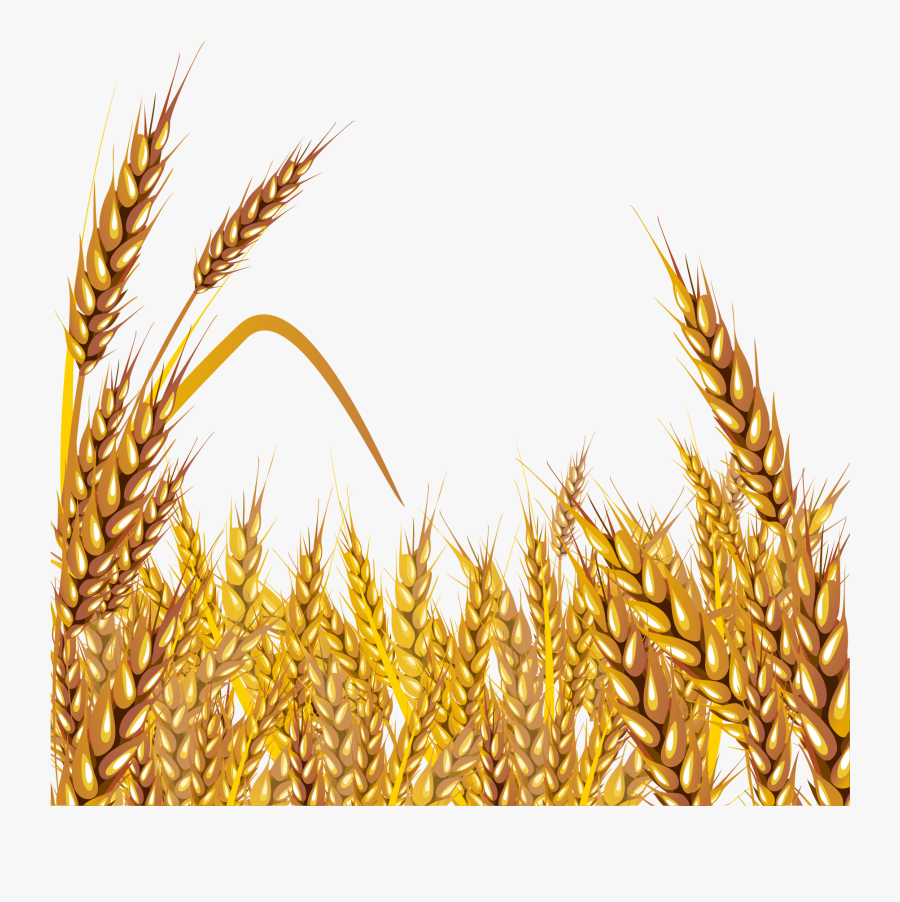Transparent Wheat Png.