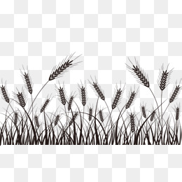 Wheat Grass Png, Vectors, PSD, And Clipa #135093.