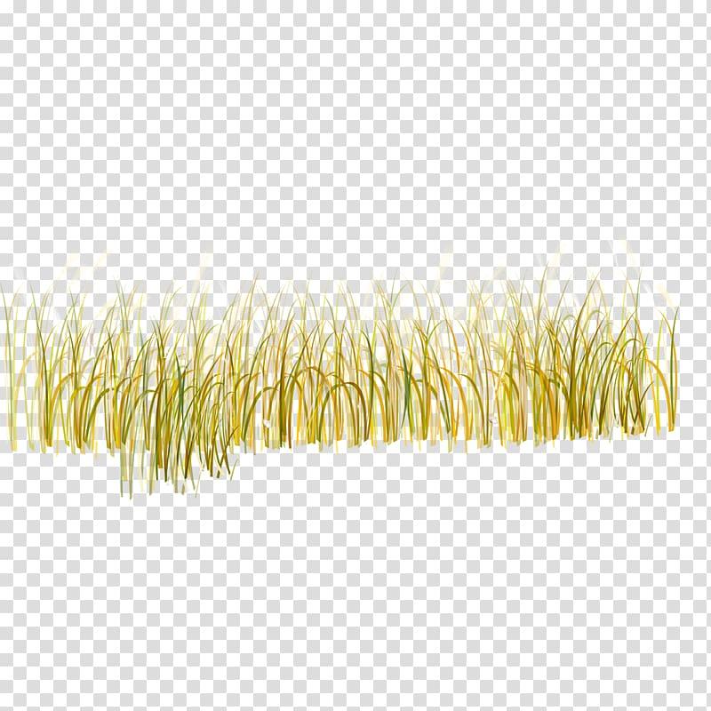 Wheat field art, Yellow Pattern, grass transparent.