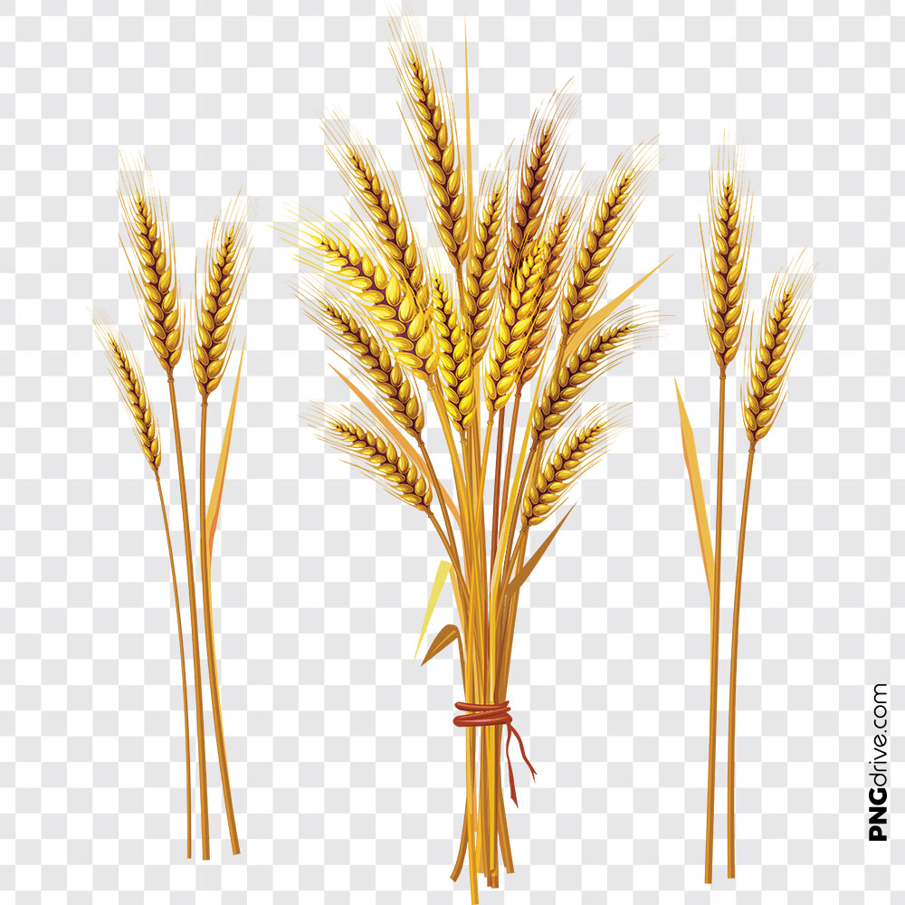 Wheat Flours, Field Vector PNG Clipart PNG Image.