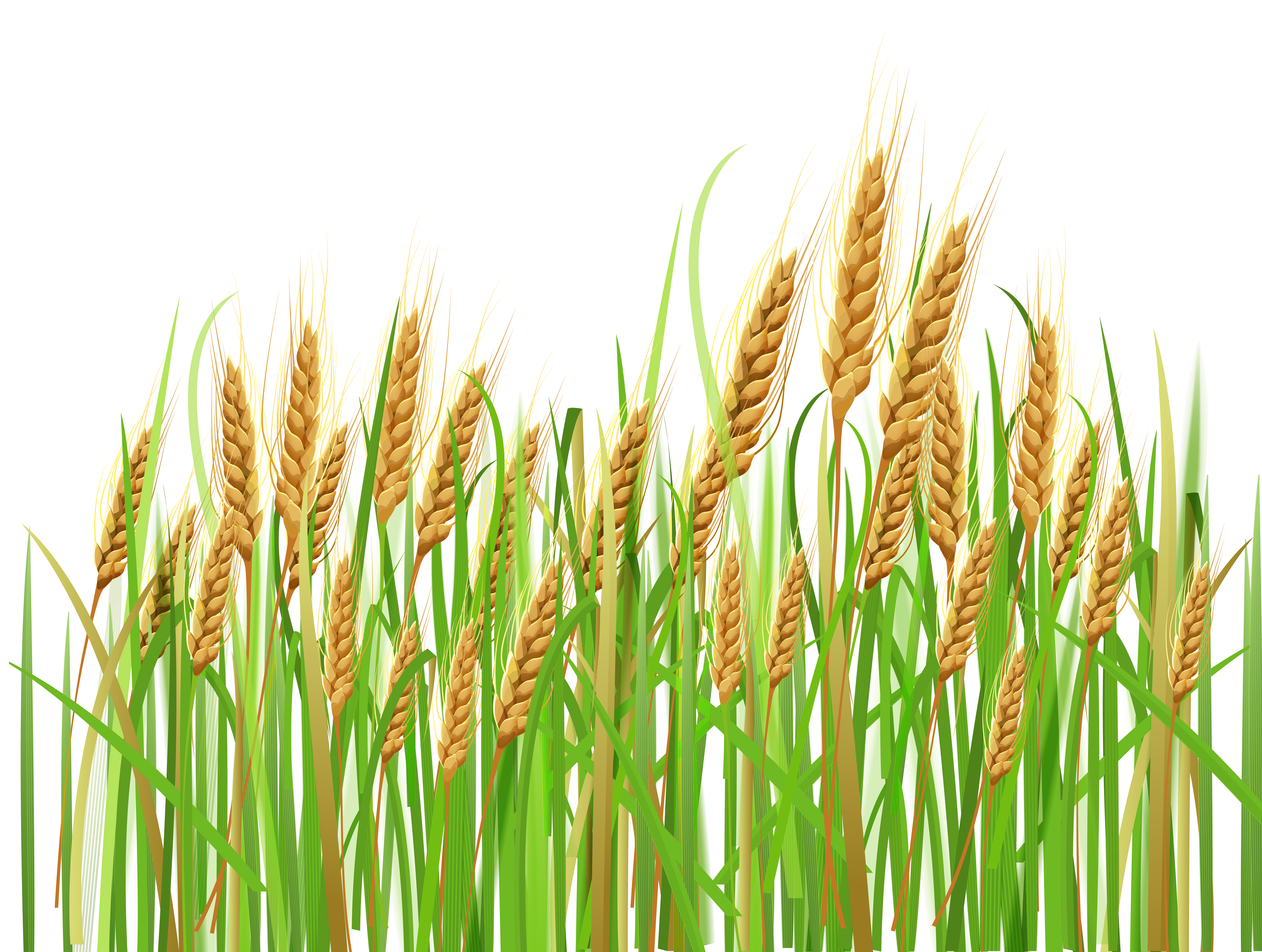 Wheat Field Clipart Png.